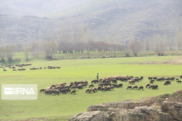 خبرنگاران خشکسالی حضور غیرمجاز دامداران را در مراتع خراسان شمالی افزایش داد